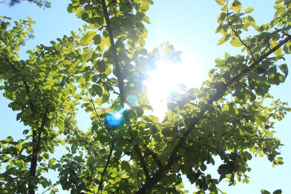 Pelletheizung Mit Solar: Umweltbewusst Heizen