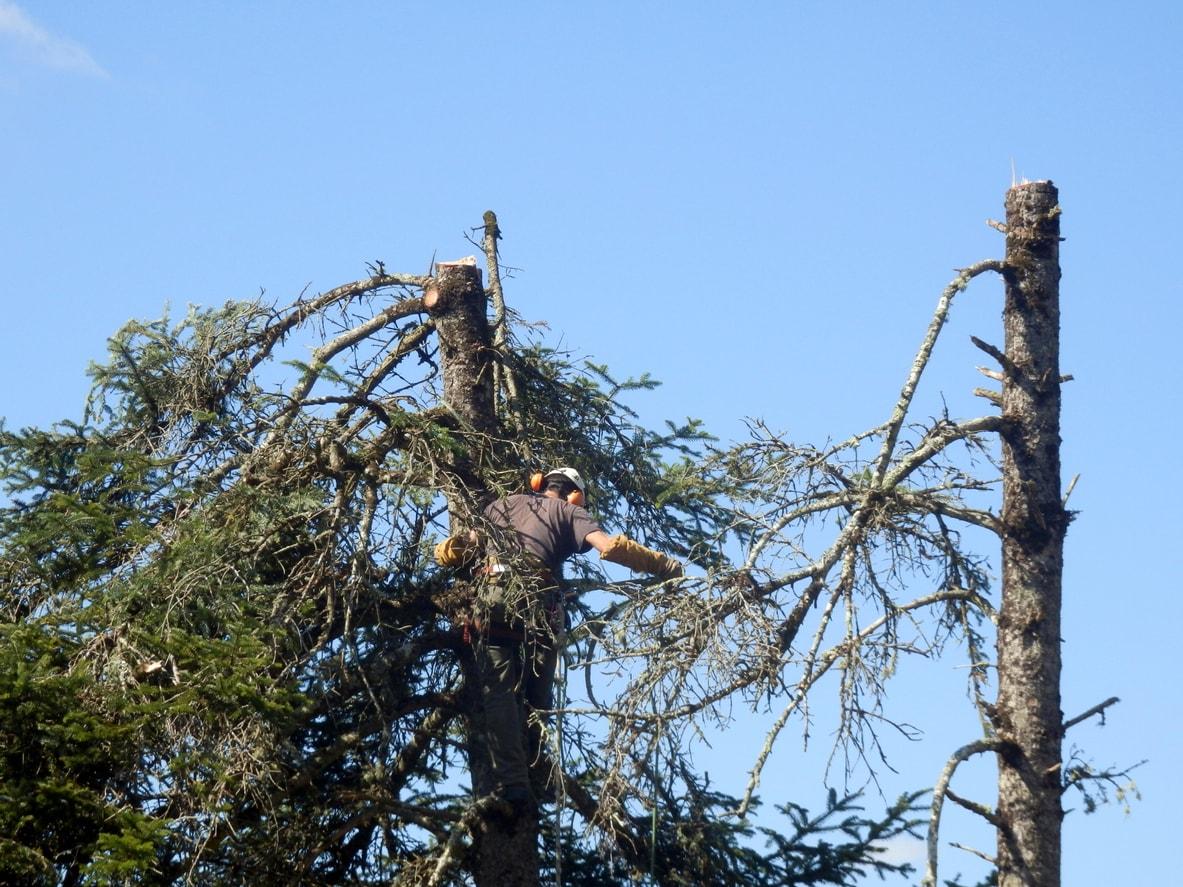 Baumfallgenehmigung Wann Ist Ein Antrag Notig Hausgarten Net 1
