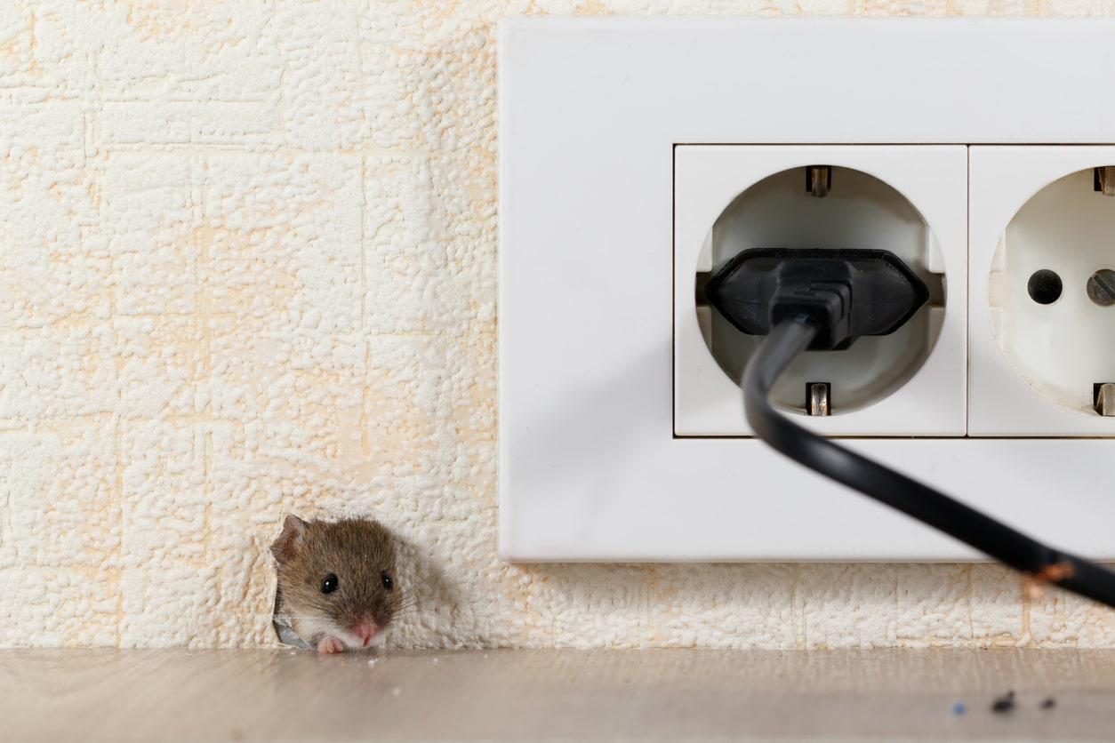 Mäuse Auf Dem Dachboden Loswerden